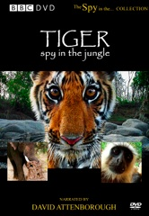 Tiger: Spy in the Jungle Image Cover