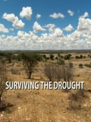 Surviving The Drought Image Cover
