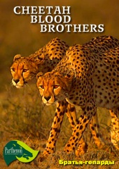 Cheetah - Blood Brothers Image Cover