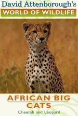 African Big Cats Image Cover