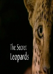 The Secret Leopards Image Cover