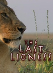 The Last Lioness Image Cover