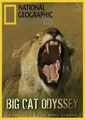 Big Cat Odyssey Image Cover