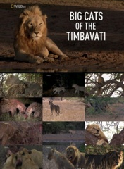 Big Cats of the Timbavati Image Cover