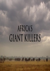 Africa's Giant Killers Image Cover