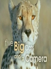 Five Big Cats and a Camera Image Cover