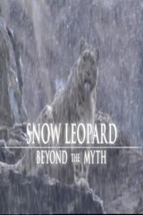 Snow Leopard Beyond The Myth Image Cover