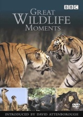 Great Wildlife Moments Image Cover