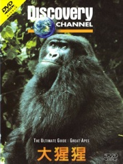 Ultimate Guide: Great Apes Image Cover