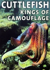 Cuttlefish: Kings of Camouflage Image Cover