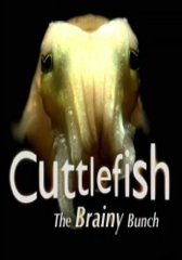 Cuttlefish: The Brainy Bunch Image Cover