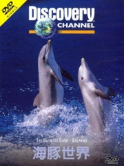 Ultimate Guide: Dolphins Image Cover
