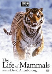 The Life of Mammals Image Cover