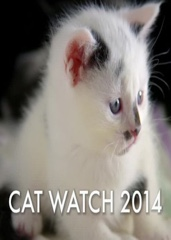 Cat Watch: The New Horizon Experiment Image Cover