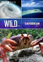 Wild Caribbean Image Cover